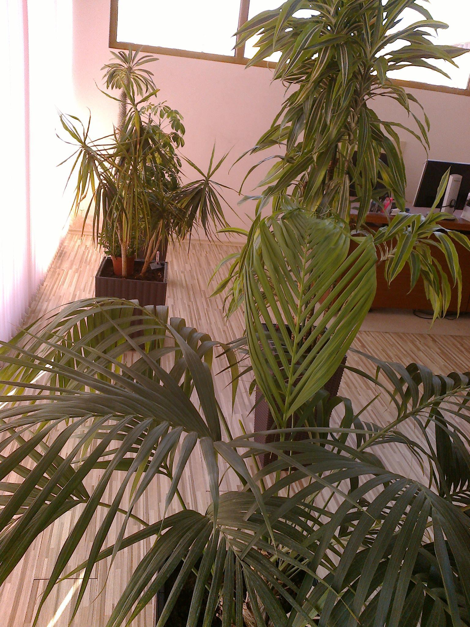 Растенията в офиса