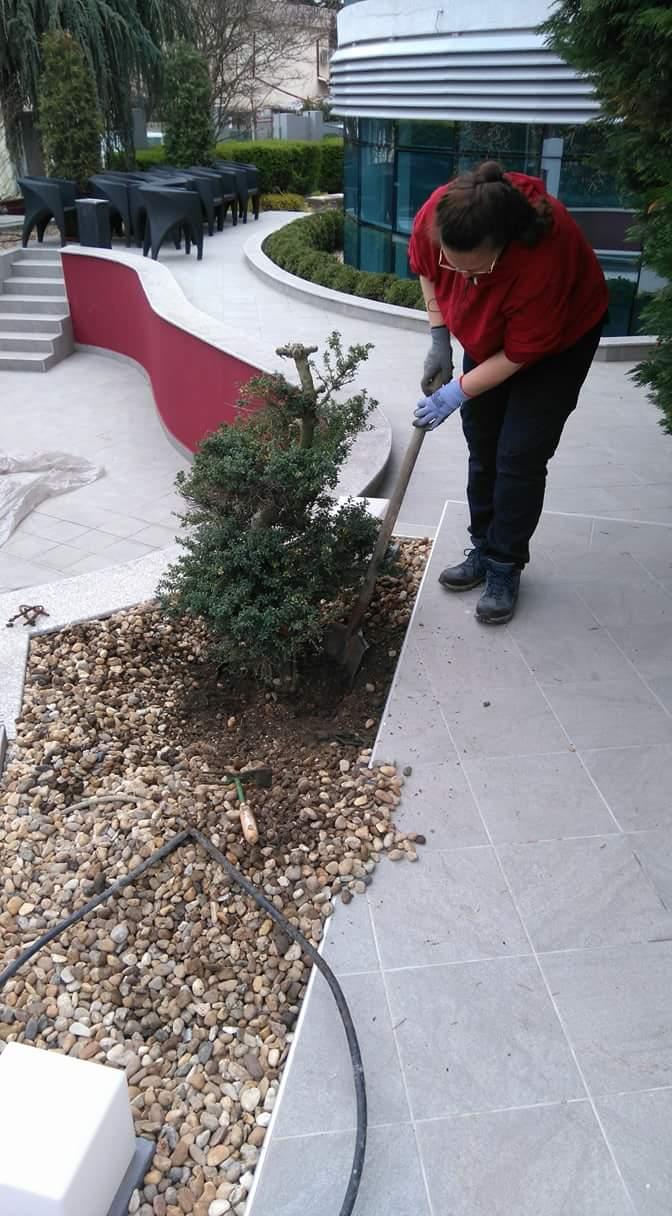 Преместване на растения