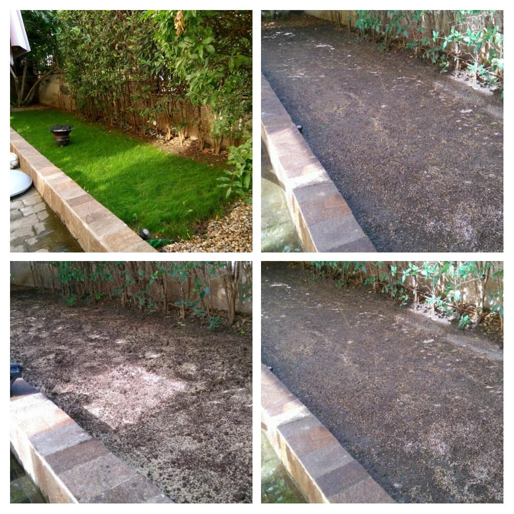 Как да изберем подходящата тревна смеска